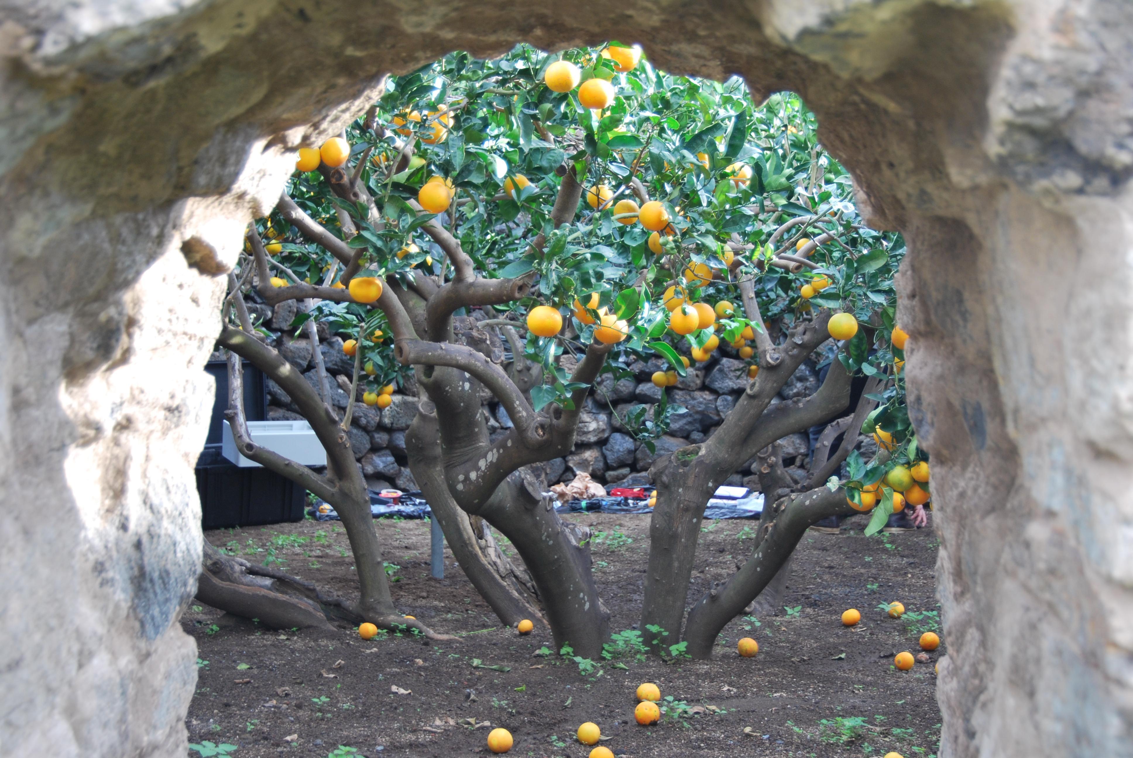 Il giardino pantesco un altra dimensione del clima - Muretti da giardino ...