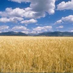 Wall Street – Il grano non dorme mai