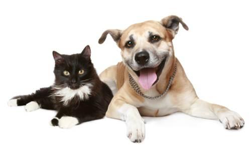 L'amaro destino di Fido e Kitty