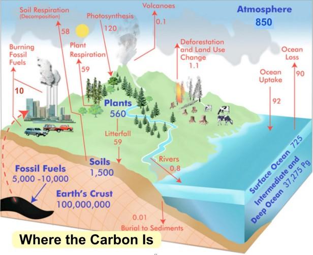 Figura 2 - Serbatoi e flussi annui globali di carbonio (valori in GTC dic arbonio) (GLOBE Carbon Cycle Project, 2010).