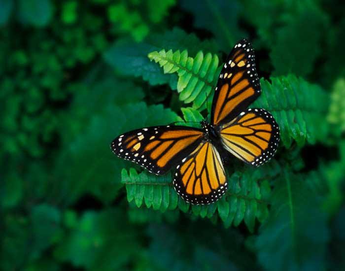 Quando la divulgazione scientifica fa cilecca climatemonitor - Immagini di farfalle a colori ...