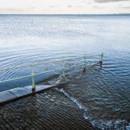 Livello dell'Oceano globale e del Mediterraneo e loro spettri