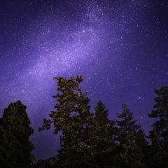 Impulsi di raggi cosmici del 773 e 994 dC visti globalmente dagli anelli di accrescimento