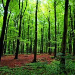 Per salvare il Pianeta, non piantate alberi!