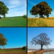 La Natura ne sa più di noi