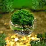 L'ambientalismo non è solo radicale